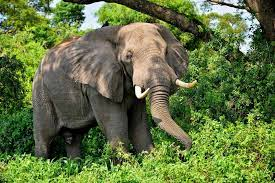 Motorcyclist Survives Angry Elephants attack in Nwoya